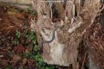 March 18th 2010 - 8.20 AM: dark pickeringii male active.