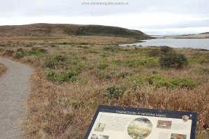 Coastal dunes in Marin County: typical habitat T.e.terrestris red morph.