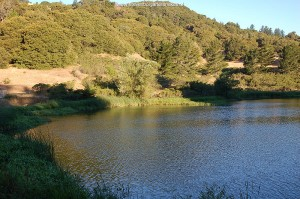 Habitat of the mountain population of T.e.terrestris from San Mateo County; the lake in July.