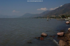 Habitat of T.e.obscurus and T.m.canescens. Lake Chapala in November 2007, site 1. (see text)
