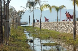 Habitat of T.e.obscurus and T.m.canescens. Lake Chapala in November 2007, site 3. The small ditch where 4 juvenile T.e.obscurus were found (see text).