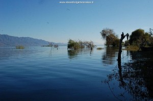 Habitat of T.e.obscurus and T.m.canescens. Lake Chapala in November 2009, site 3. Note the high water level and the willow trees in the water.