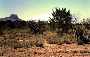 Chihuahua desert near Alpine, Texas