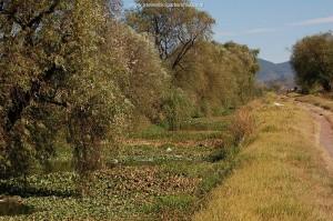 Canal near Zacapu, habitat of Thamnophis eques insperatus in November 2008.