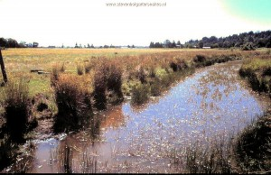 Habitat T.s.concinnus; Slough in Willamette Valley (Oregon) bordering farm.
