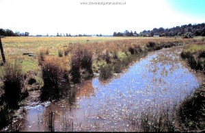 Habitat T.s.concinnus; Slough in Willamette Valley (Oregon) bordering farm.