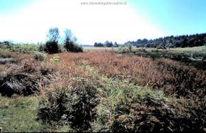 Habitat T.s.concinnus; Overvieuw slough and surrounding area (Willamette valley, Oregon).