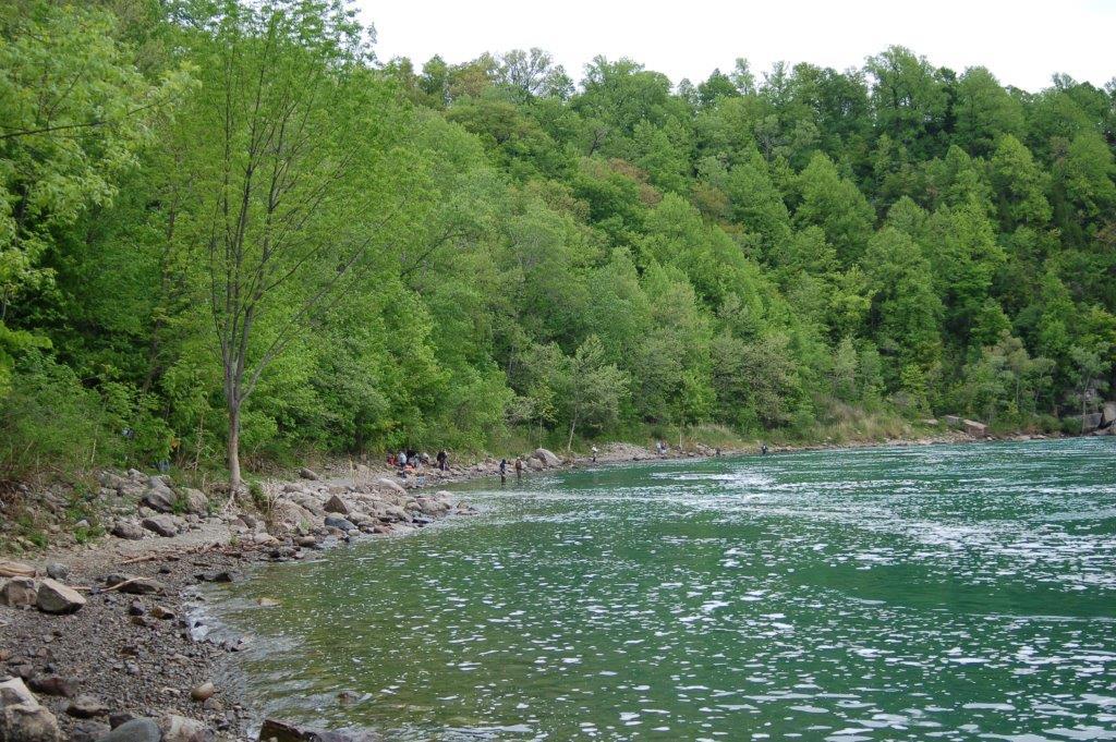 Habitat T.s.sirtalis and Nerodia sipedon sipedon close to the Niagara Falls, Ontario Canada