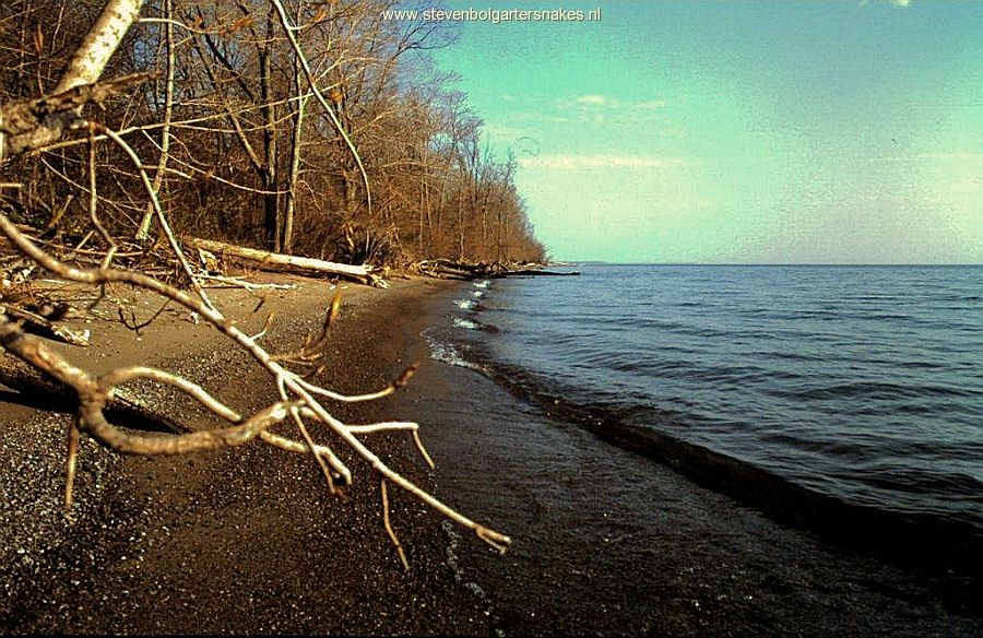 Sandy coast of Pelee Island; may 7th 2005.