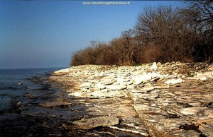 Typical limestone habitat on Pelee Island; may 7th 2005.