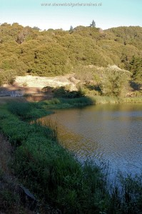 Biotope of T.a.atratus and T.e.terrestis in San Mateo County, Californië. Sun shines in July from 7:30 hour on the banks where the snakes take a sunbath.