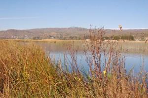 Lake Zacapu, habitat of Thamnophis eques insperatus in November 2008.