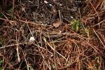 April 3rd, Thamnophis radix