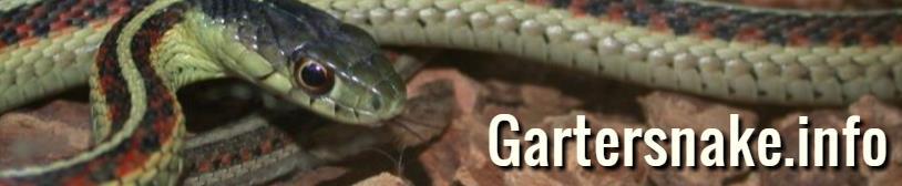 Gartersnakes-info