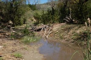 Habitat van T.p.rubrilineatus in Real County (maart 2012)