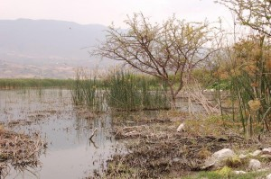Lake Cajititlan, northern shore in May 2008