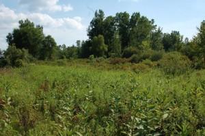 "Habitat T. butleri in Michigan in August; ""tall grass prairy"""
