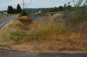 "A road side ""dry ditch"" in the river delta in Washington, USA; habitat of T.ordinoides"