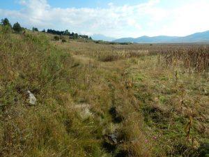 Habitat T. scaliger near Atlacomulco in November (overvieuw)
