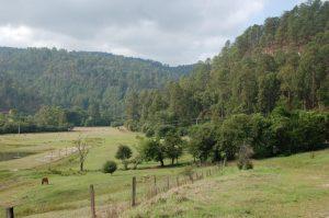 Habitat T. scaliger in Michoacan in May (valley 1; overvieuw)