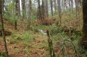 Habitat T. scaliger in Michoacan in November (valley 2; little creek)